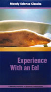 Experience With An Eel, Moody Science